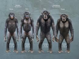 Side body chimps